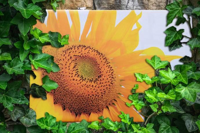 Tuinposter zonnebloemen
